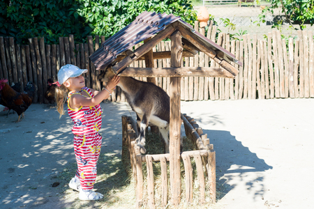 baby goat: A child, a little girl, feeds a goat on a farm. Stock Photo