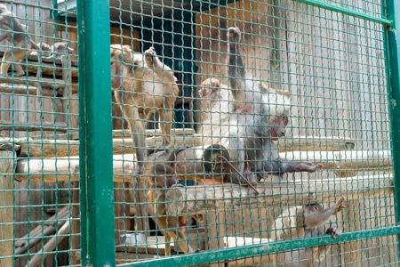 Funny monkeys ask food from visitors to the zoo through an iron cage.