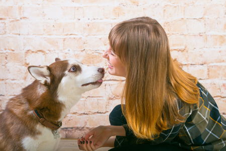 A dog of the Husk breed with his mistress is posing in the studio. The basics of training pets.