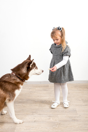 A child, a little girl, is training a dog of the Husk breed. Favorite pet, best friend.