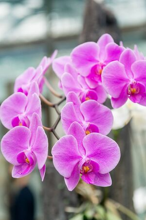 Surprising in their beauty, flowering multicolored orchids grow in the orchidarium.