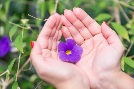 A small gentle purple flower in the palms of a girl. Hand care and hygiene.
