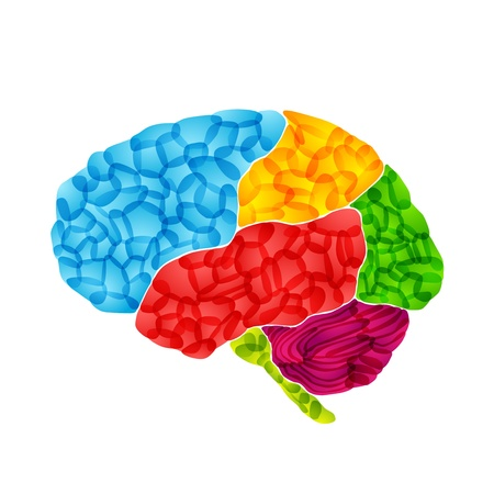 human brain, vector abstract background photo