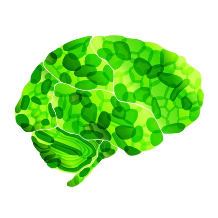 oblongata: human organic brain, vector abstract background