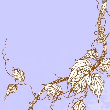 grape crop: vintage background