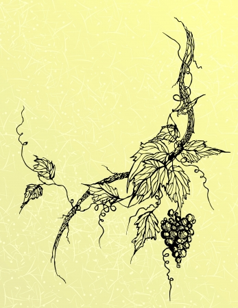 grape crop: fondo vintage Vectores