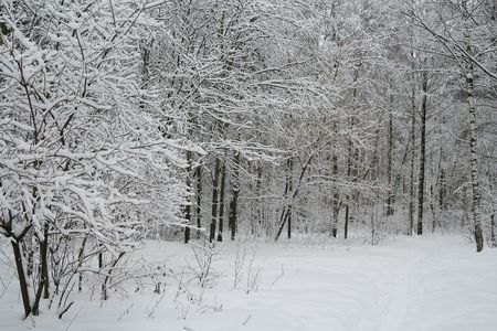 the snow covered tree brunches in winter forest Stock Photo - 637194