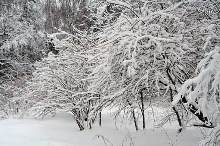 the snow covered tree brunches in winter forest Stock Photo - 651293