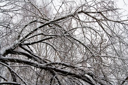 Snow Covered Tree Branches in Winter Forest 1 Stock Photo - 748741