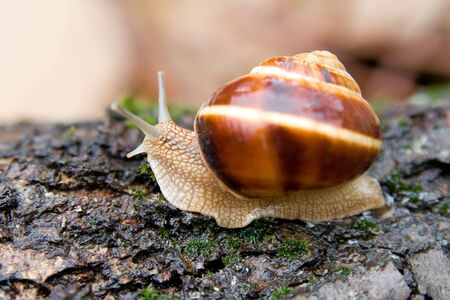 cochlea: Snail in a Summer Garden. Close-Up