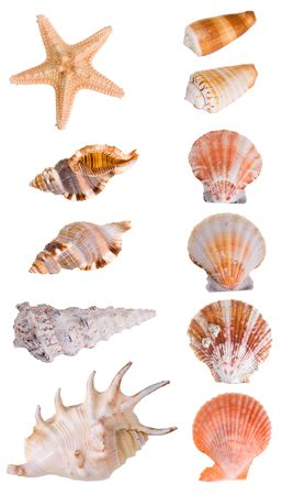 Seashells collection isolated on white background.