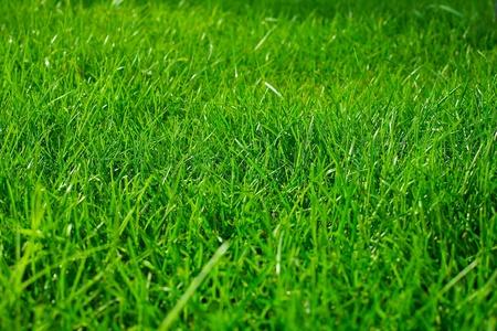Green grass texture background Stock Photo - 8692973