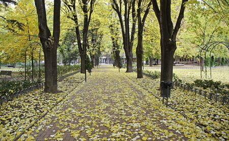 sensations: Autumn Park with trees and leaves on the ground, landscape nature Stock Photo