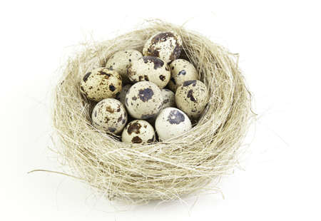 Eggs in the nest, eggs being incubated detail, bird birth