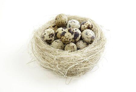 incubate: Nest egg, nest detail of quail eggs, nature
