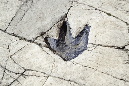 Fossilized dinosaur footprints, ancient archaeological find detailed, textured background, exploration