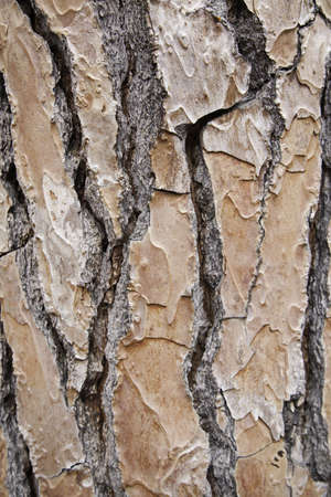 Bark of tree in the forest, detail of a tree in the woods, nature photo