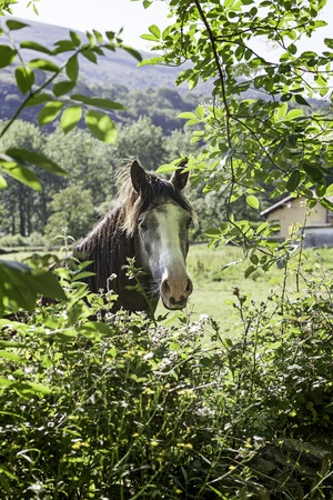 Horse in the forest, detail of a wild animal in the wild, mammal free photo