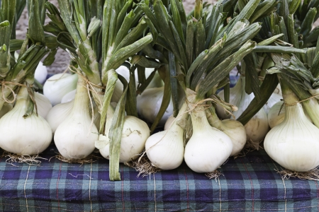 Onions from the garden, a detail of ecological vegetables, healthy lifestyle food Stock Photo - 21559979