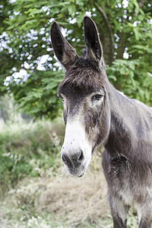 Donkeys Spanish, detail of a typical Spanish farm animal, mammal on the farm, animal free photo
