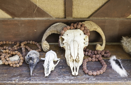 Skulls of animals, detail of a dead animals, skulls for ritual witchcraft photo