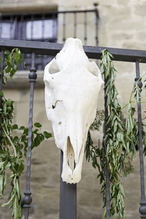 Old cow skull, detail of an old dead cow head, riutal traditional superstition photo
