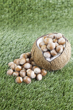 Coco with raw hazelnuts, detail of a coconut open and a closed hazelnuts photo