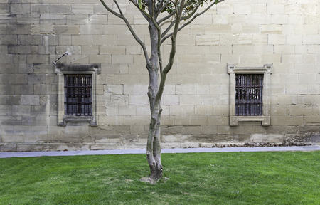 Tree trunk in a medieval courtyard, detail of a tree on a lawn, historic courtyard photo
