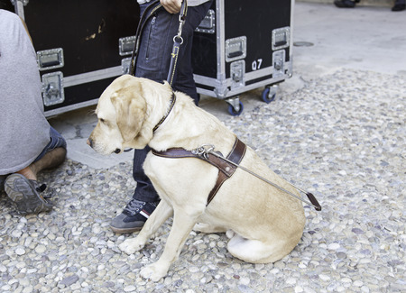 Guide dog for the blind, detail of an animal to help visually impaired photo