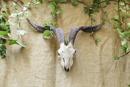 Indian Skull animal, detail of an ancient Indian tradition photo
