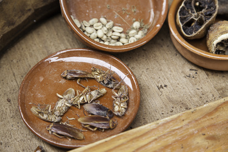 Dead cockroaches in a dish, detail of a dead insect, disgust and dirt