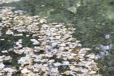 Leaves in a pond, detail of an autumn scene photo
