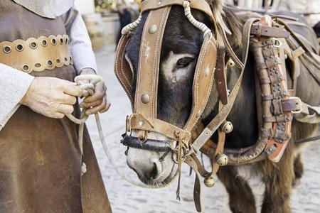 zoogdier: Donkey hoofd, detail zoogdier dier boerderij Stockfoto