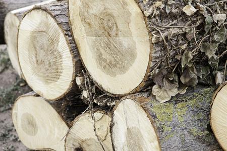 environment damage: Detail of cut logs, cut logs, damage to the environment