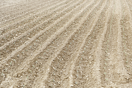 plowed: Land plowed for planting, agriculture detail Stock Photo