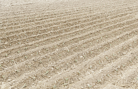 Land plowed for planting, agriculture detail Stock Photo