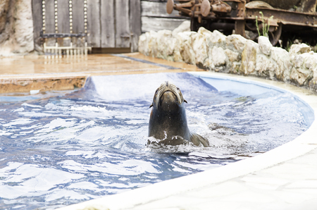 zoo animals: A sea lion show, a show with detail of marine animals Stock Photo