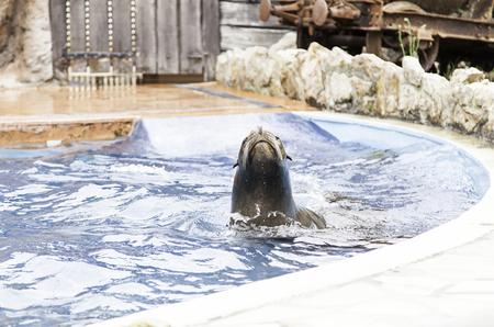 A sea lion show, a show with detail of marine animals Фото со стока
