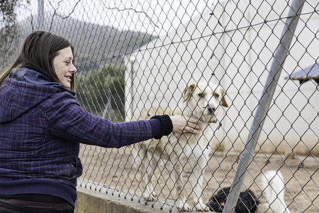 Woman petting stray dogs, kennel for stray animals
