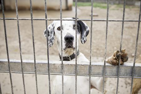 vagabundos: Perro abandonado y el abuso animal enjaulado y negligencia