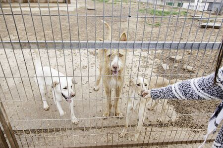caged: Abandoned dog and caged animal abuse and neglect