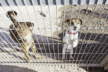 humane: Abandoned dog and caged animal abuse and neglect
