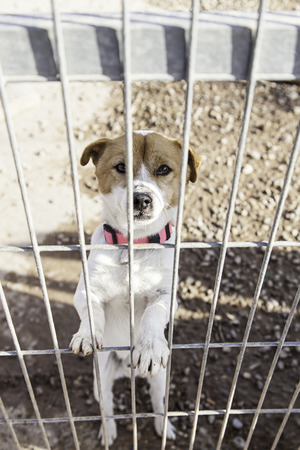 neglect: Abandoned dog and caged animal abuse and neglect