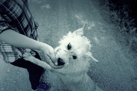 toyterrier: Dog eating out of hand, happy animal mammal detail