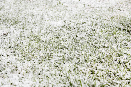 Snow on the grass, detail of a cold winter day Фото со стока