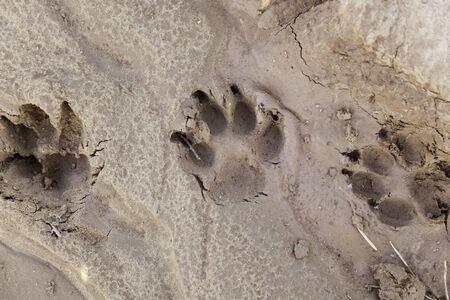 개 진흙, 지상에 마크의 세부 사항에 추적 스톡 콘텐츠