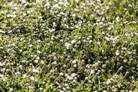daisys: Daisies in the field, detail of some flowers, spring, pollen
