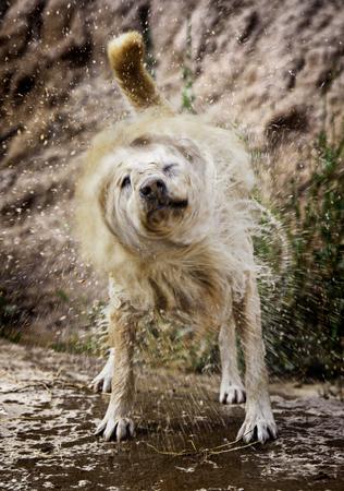 Dog shaking water, detail of a wet animal, enjoying and having fun