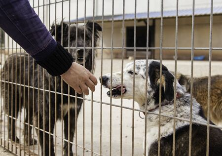 Giving love about abandoned dogs in a kennel, detail of animal shelter, abandonment and grief, volunteering Stock Photo