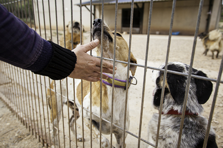 放棄された犬の犬小屋、動物の避難所、放棄と悲しみの詳細について愛を与えるボランティア